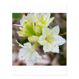 Bunch of white wild flowers postcard