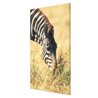 Burchell's zebra 2 canvas print