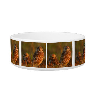 burrowing owl couple bowl
