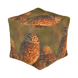 burrowing owl couple cube pouffe