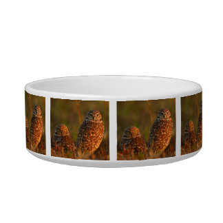 burrowing owl couple pet water bowls