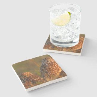burrowing owl couple stone beverage coaster