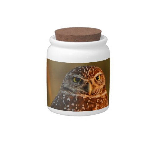 burrowing owl couple candy dish