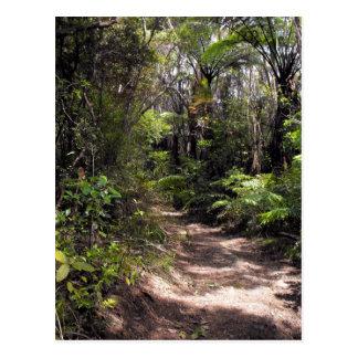 Bushwalking in New Zealand Postcard