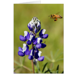 Busy Bee Contemplating a Wild Lupin Flower Card