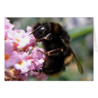 Busy Bumblebee and Pink Flowers Greeting Card