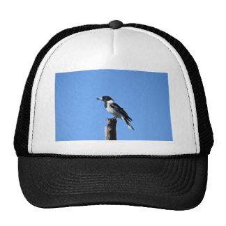 BUTCHER BIRD RURAL QUEENSLAND AUSTRALIA CAP