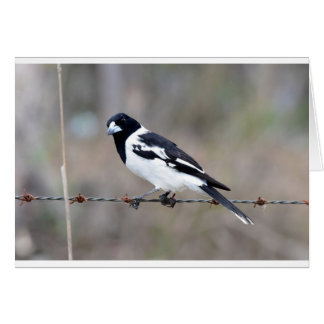 BUTCHER BIRD RURAL QUEENSLAND AUSTRALIA CARD