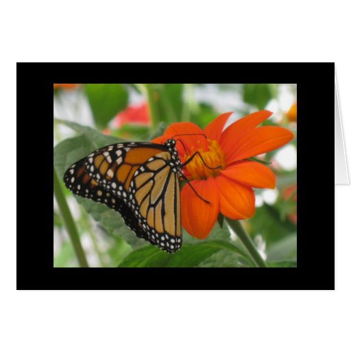 Butterflies are free greeting cards