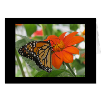 Butterflies are free note card