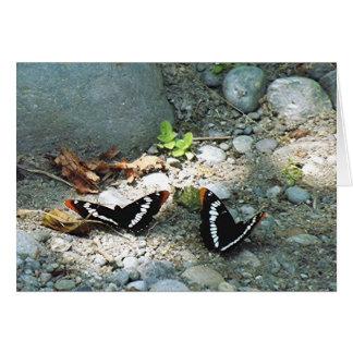 Butterflies Note Card