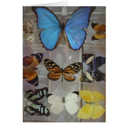 Butterflies of Panama Greeting Card