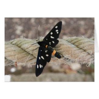 Butterflies priest card