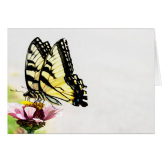 Butterflies Sharing a Flower Blank Card
