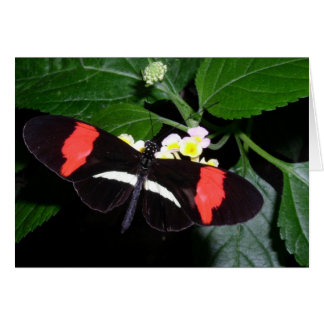 Butterfly 5 note card
