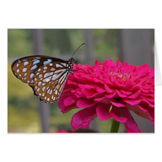 Butterfly 6 greeting cards