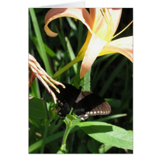 Butterfly at Rest Note Card