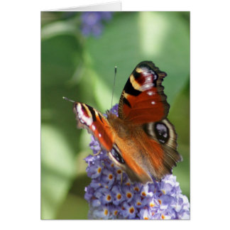 Butterfly BL2 - note card
