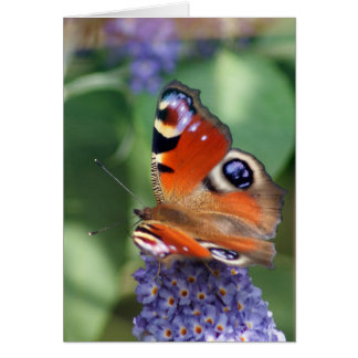 Butterfly blue - note card