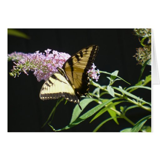 Butterfly Cad Cards