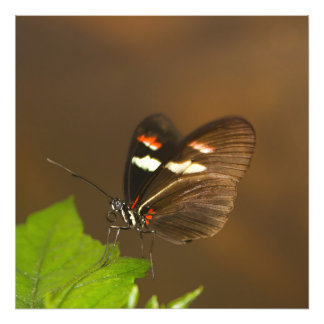 Butterfly - Close Up Photo Art