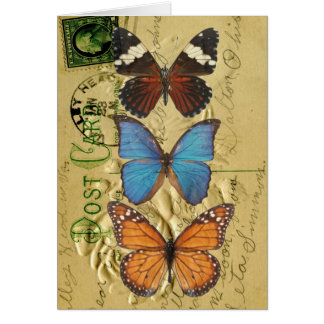 Butterfly collection note card