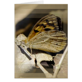 Butterfly dreaming note card