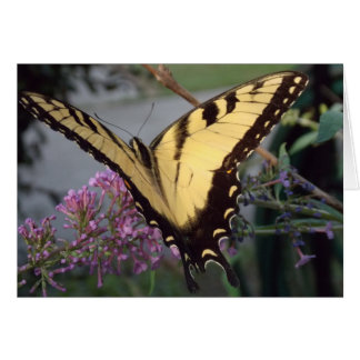 Butterfly Dreams Note Card