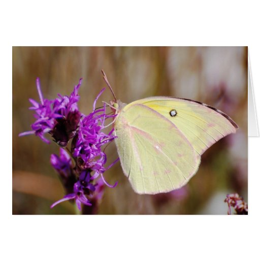 Butterfly for Graduation and Inspirational Greeting Cards