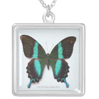 Butterfly found in regions of Asia and India Silver Plated Necklace