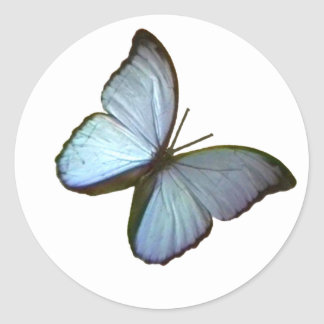 Butterfly Freiburg Germany Blue 45 deg The MUSEUM Round Stickers