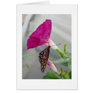 Butterfly Glory Cards