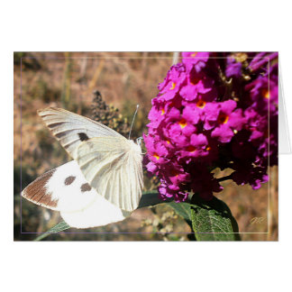 Butterfly. Greeting card. Card
