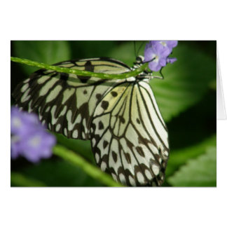 Butterfly Hello Note Card