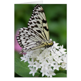 Butterfly horizontal note card