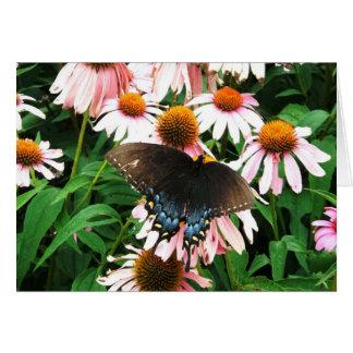Butterfly in Coneflowers Blank Card