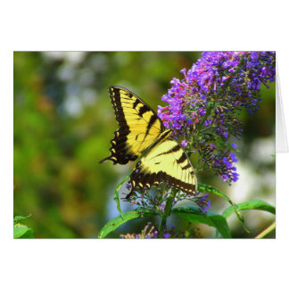 Butterfly Note Card