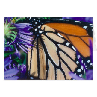 Butterfly Notecard Greeting Cards