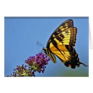 Butterfly Notecard Note Card