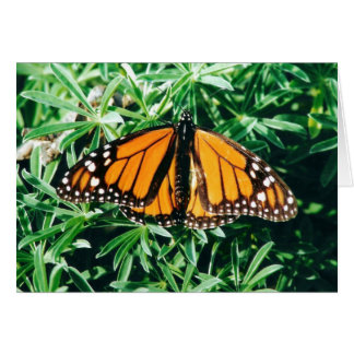 Butterfly notecards card