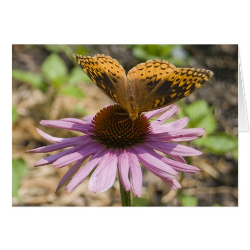 Butterfly on a Purple Coneflower Greeting Cards