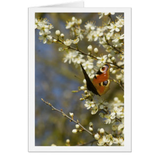 Butterfly on blossom note card