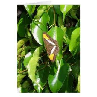 Butterfly on green card