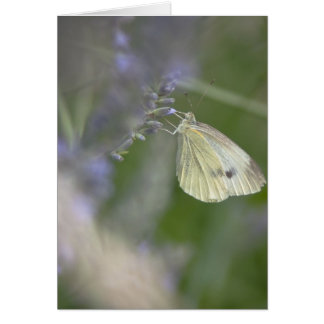 Butterfly on Lavender Card