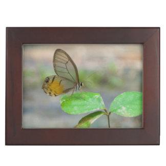Butterfly On Leaf, Iquitos, Maynas, Peru Keepsake Box