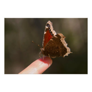 Butterfly On My Finger Posters
