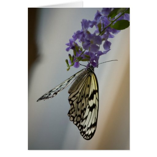 Butterfly on Purple flowers Greeting Card