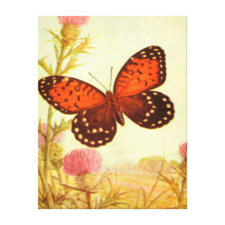 Butterfly - Orange - Black Gallery Wrapped Canvas