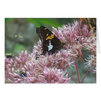 Butterfly resting greeting card