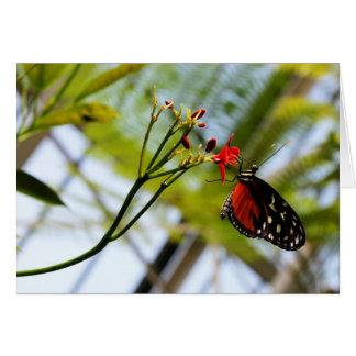 Butterfly Sips Note Card